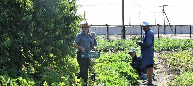 Первый сбор урожая